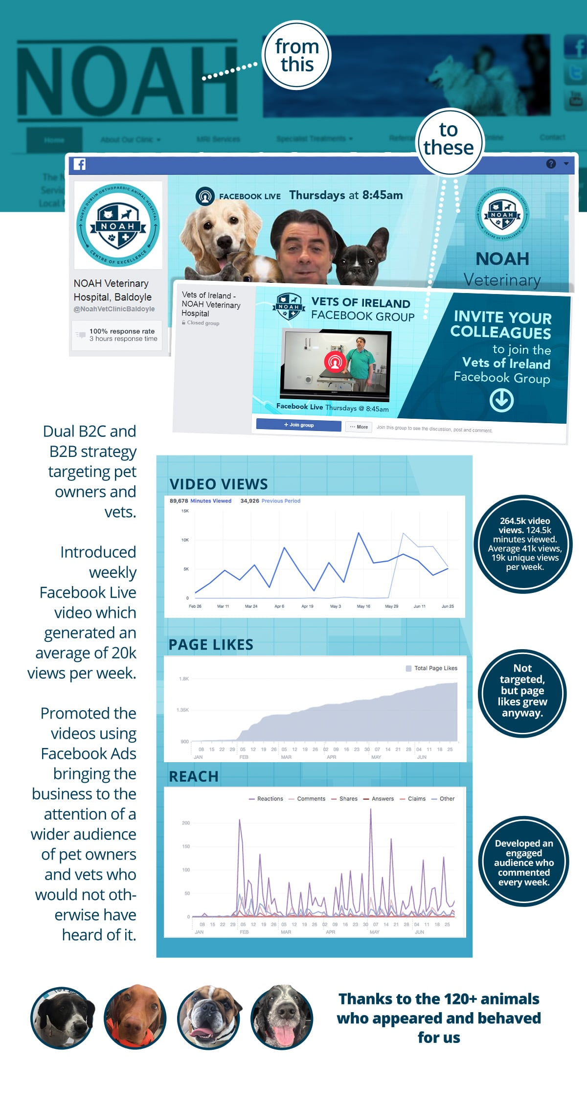 Veterinarian Social Media Strategy Case Study