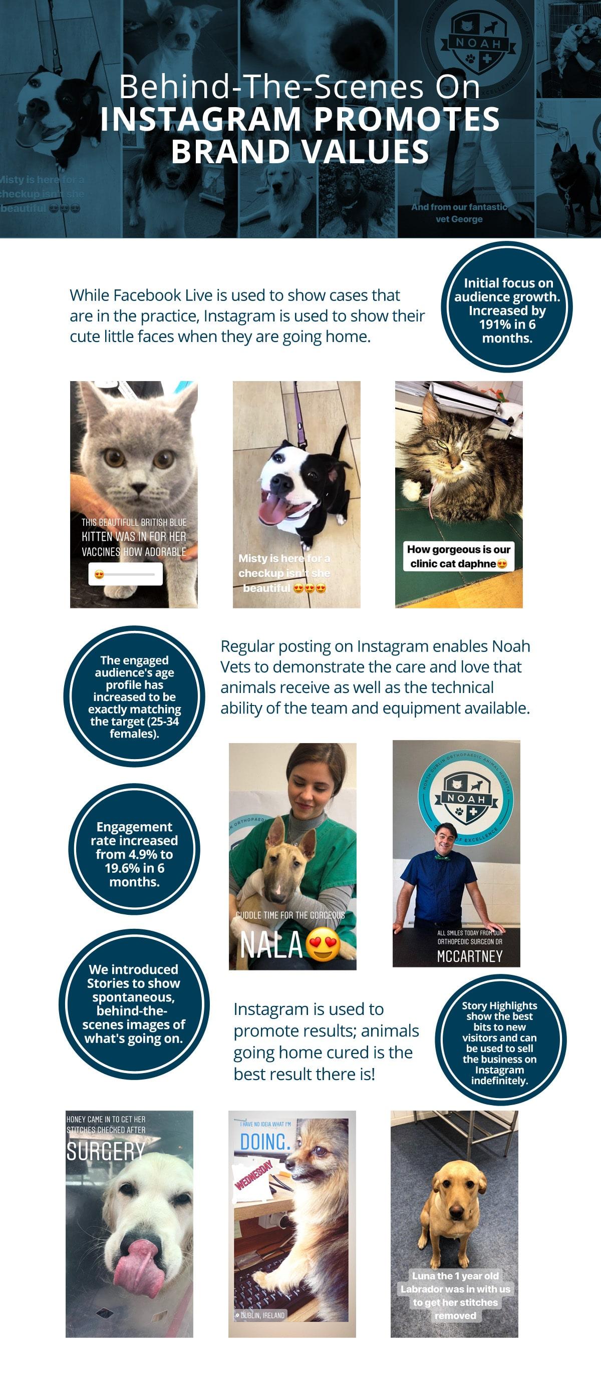 instagram-vets-case-study