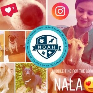 instagram for vets